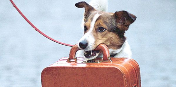 반려동물과 떨어지고 싶지 않다면? 반려동물과 함께 여행하기