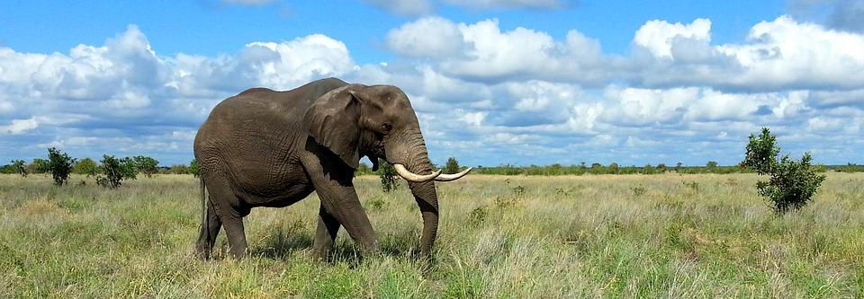 elephant-1240715_960_720