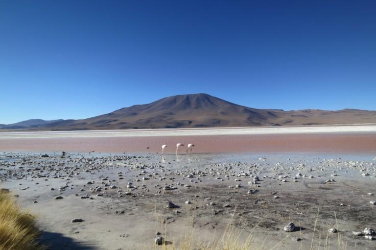 atacama_desert_chile_flamingos_volcano_salt_lake_desert_dry_landscape-764326