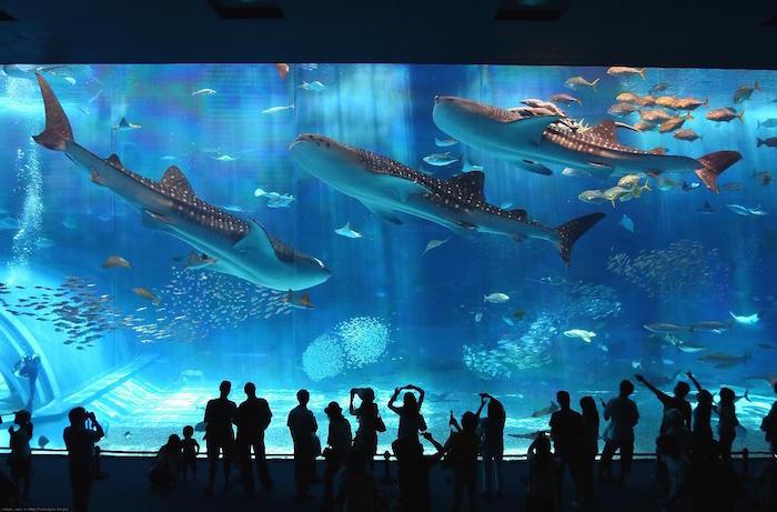 Aquariums1.jpg